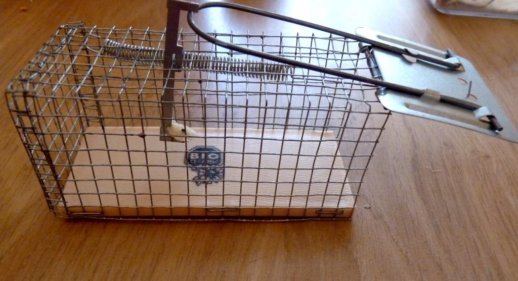 nasse souris le site sur la souris domestique. Black Bedroom Furniture Sets. Home Design Ideas