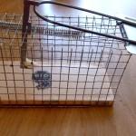 la souris sauvage le site sur la souris domestique. Black Bedroom Furniture Sets. Home Design Ideas