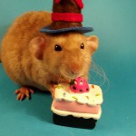 rat anniversaire birthday