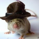 souris chapeau