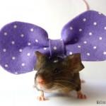 gros noeud violet à pois