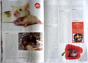 Article sur la souris domestique