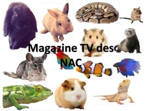 magazine nac